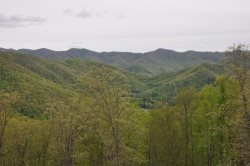 Real Log Interior and Gorgeous Upscale Furnishings
