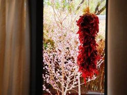 Ourt your window in the spring