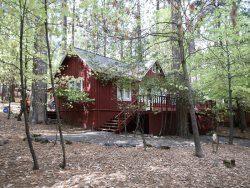 Black Oak Cabin - surrounded by dogwood trees!