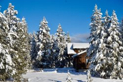 Big Pine Lodge -- Nestled in the Trees on 1 Acre, 3500 Sq. Ft, 13 Beds, Sleeps 19!
