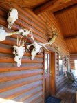 Hunting Cabin Decor Outside Chaparral Suite