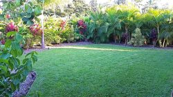 Front yard with tropical landscaping