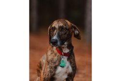 PLOTT HOUND RETREAT - Starting at $150/night