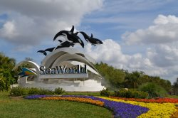 Visit the famous Sea World with your family.