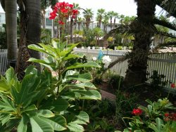 Pathway to the backyard Lotus Villa Luxury 4 story Vacation Rental at the Shores South Padre Island