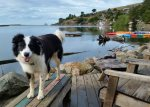 Dog Friendly River View Cottage...Dogs Love Jenner