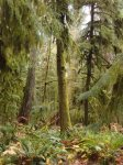 Cathedral Grove Provincial Park - Ancient Cedars