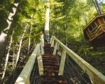 Steps leading to treehouse