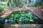 Goldfish Pond in the Backyard