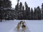 Dog Sled Adventures