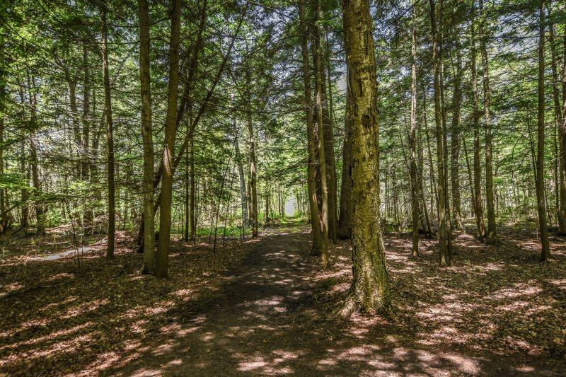 Hidden River Cabin | Crystal Vacation Rentals