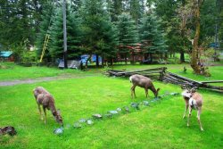 Sweet little cottage with lots of grass that the deer will share with you!