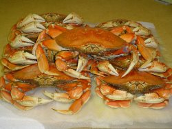 Yummy Dungeness Crab from the Alsea Bay
