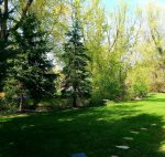 Picturesque backyard with tree-lined creek and mature trees
