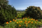 Mountain view with California Poppy display