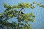 Eagles' Hideaway