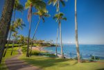 Relax under the shade of a palm tree on Kapalua Bay