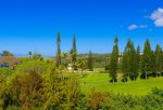 Honolua Bay and Kapalua Chapel enhance the lovely green Norfolk pines planted over 80 years ago