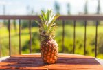 Pineapples are a reminder of the Kapalua Resort`s plantation days