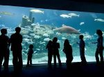 Don`t forget to visit the NC Aquarium
