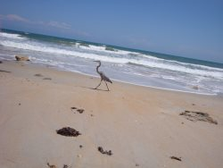 FLAGLER BEACH OCEAN VIEW MANOR  BEAUTIFULLY FURNISHED & DECORATED VACATION RENTAL