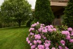 Beautiful rhododendron trees on the property