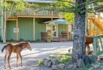 Main Lodge - Wild Horses