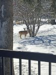 Wildlife are seen daily from the back porch