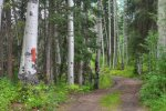 Lake View House vacation rental home Durango Colorado wooded driveway