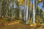 Fall foliage at Lake View House vacation rental home Durango Colorado