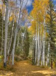 Fall color at Lake View House vacation rental home Durango Colorado
