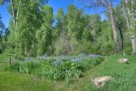 Wildflower patch in backyard at Durango Hesperus Colorado vacation rental Cranberry Cottage Riverside Cabin
