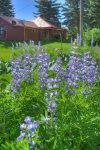 Durango Hesperus Colorado vacation rental Cranberry Cottage Riverside Cabin wildflower garden on back lawn