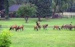 Elk herd grazing at Durango Rock House vacation rental home Colorado
