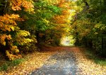Beautiful fall scenery awaits - visit in all seasons