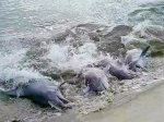 watch the dolphins strand feed on Seabrook Island