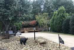 Apple Valley Farm 151