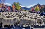 Fall Festival of Trailing of the Sheep