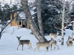 You`ll want to stay at Chickadee Chalet