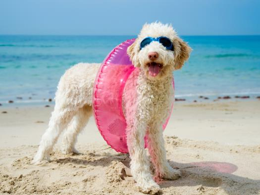 Puppy with inner tube - pet friendly rentals