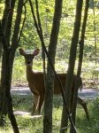 golf cart for rent from owner