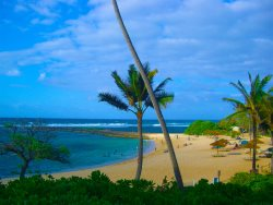 Honu Hale ~ Relaxation Awaits at the Turtle House