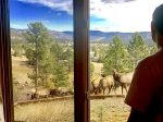 Elk viewing from Glam Room window