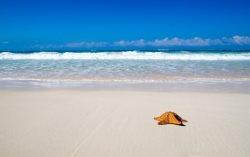 WOW! Direct BeachFront Stunning Waters Edge 208!