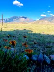 Prairie flowers and mountain views abound at Bluebird Lodge